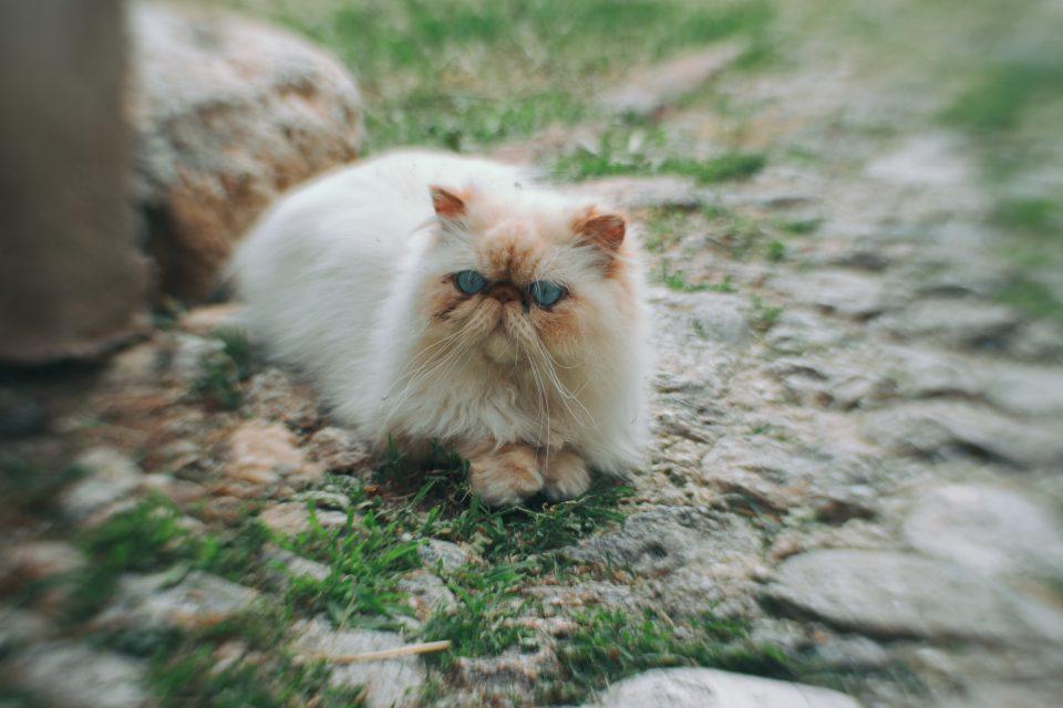 Monteggiori, la città dei gatti